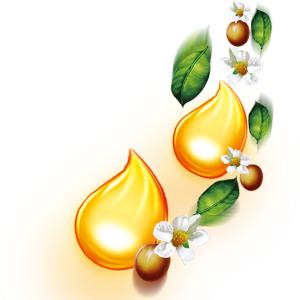 Етерични и базови масла